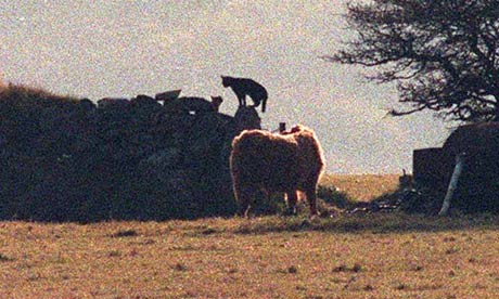 Beast of Bodmin Moor - also possibly Steve
